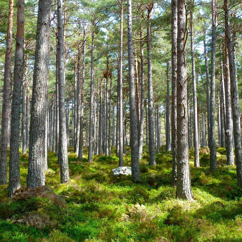 Wald - Nachhaltigkeit Immobilien - Gebäudeautomatisierung - Umweltschutz FFM - Nachhaltige Immobilien - Natur